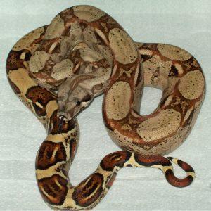 Barranquilla, Colombia – TC Reptile